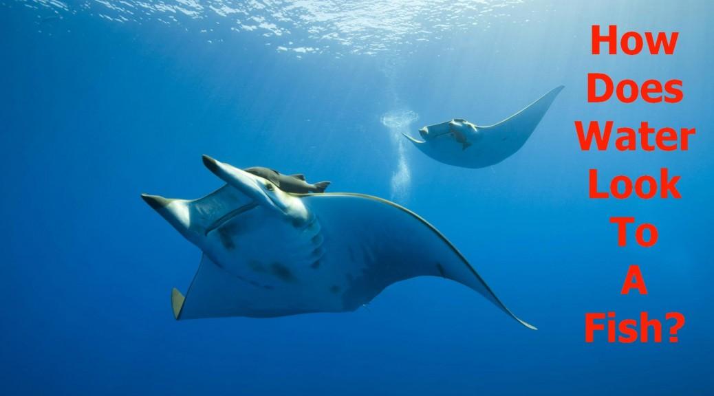 rayfishtext